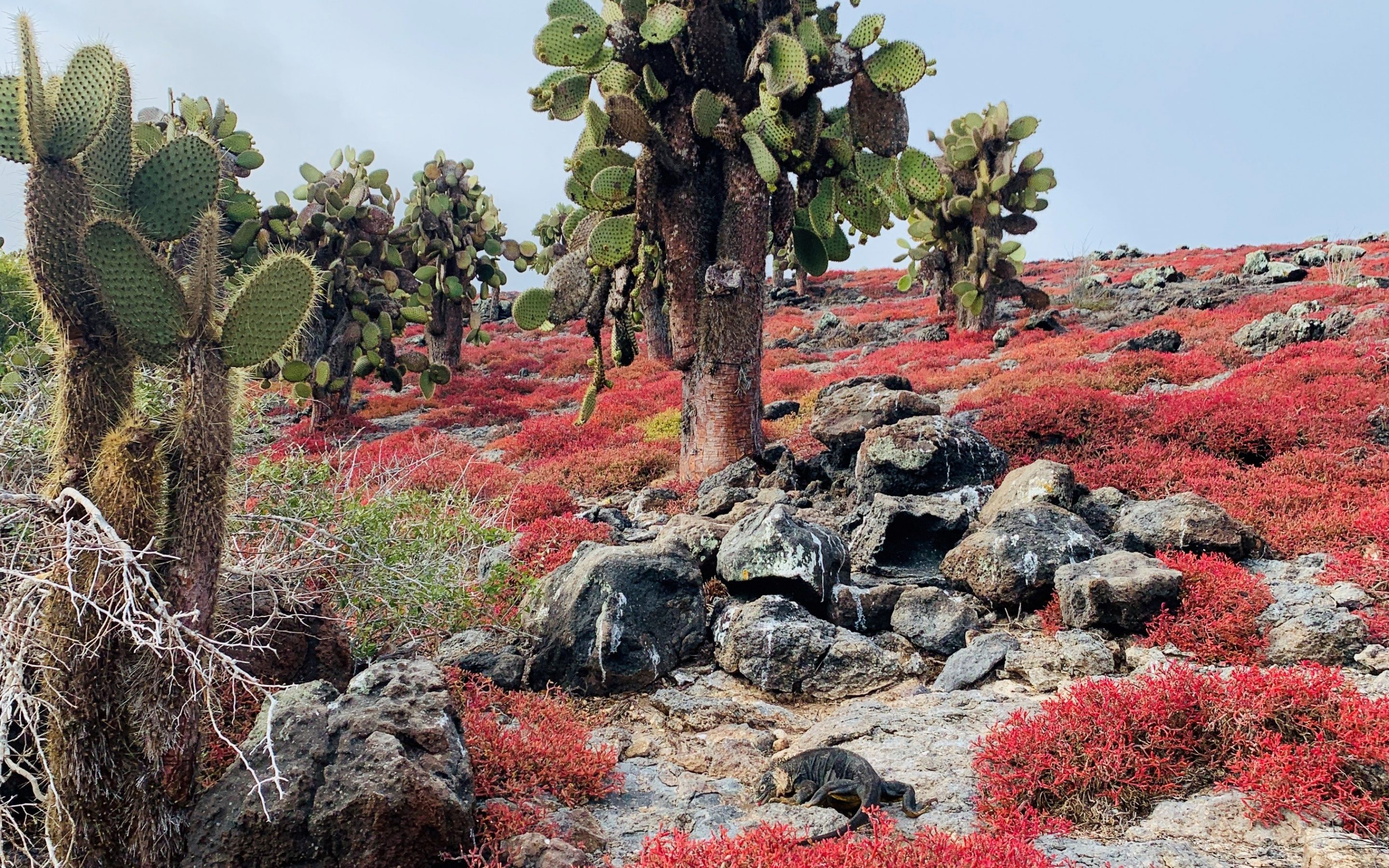 ON THE PRESERVATION OF WILD SPACES…GALÁPAGOS ISLANDS: DR SOPHIE ADAMS
