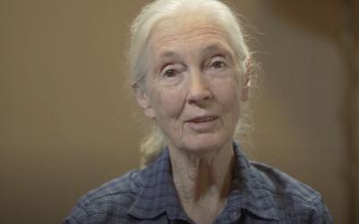 Jane Goodall – Filmed Faculty