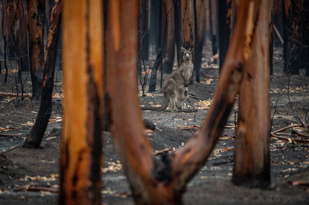 Australian Bushfire - Photo by Jo-Anne McArthur on Unsplash