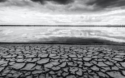 'Existential threat to our survival': see the 19 Australian ecosystems alreadycollapsing